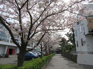 20160406始業式③桜.jpg