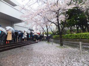 20160407①桜.jpg