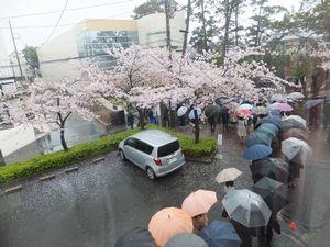 20160407②桜.jpg
